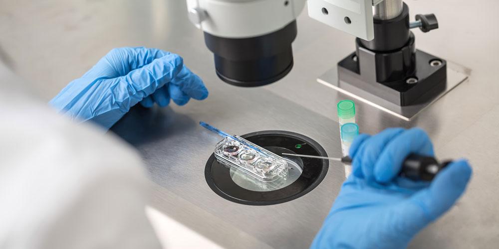 Kalzium – ein entscheidender Schlüssel für die Aktivierung von Spermien und Eizelle!