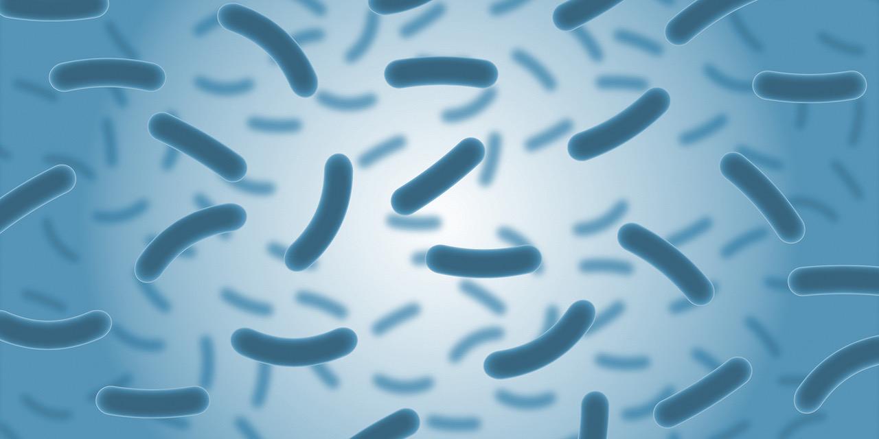 Immer öfters im Fokus – Mikrobiom und Kinderwunsch